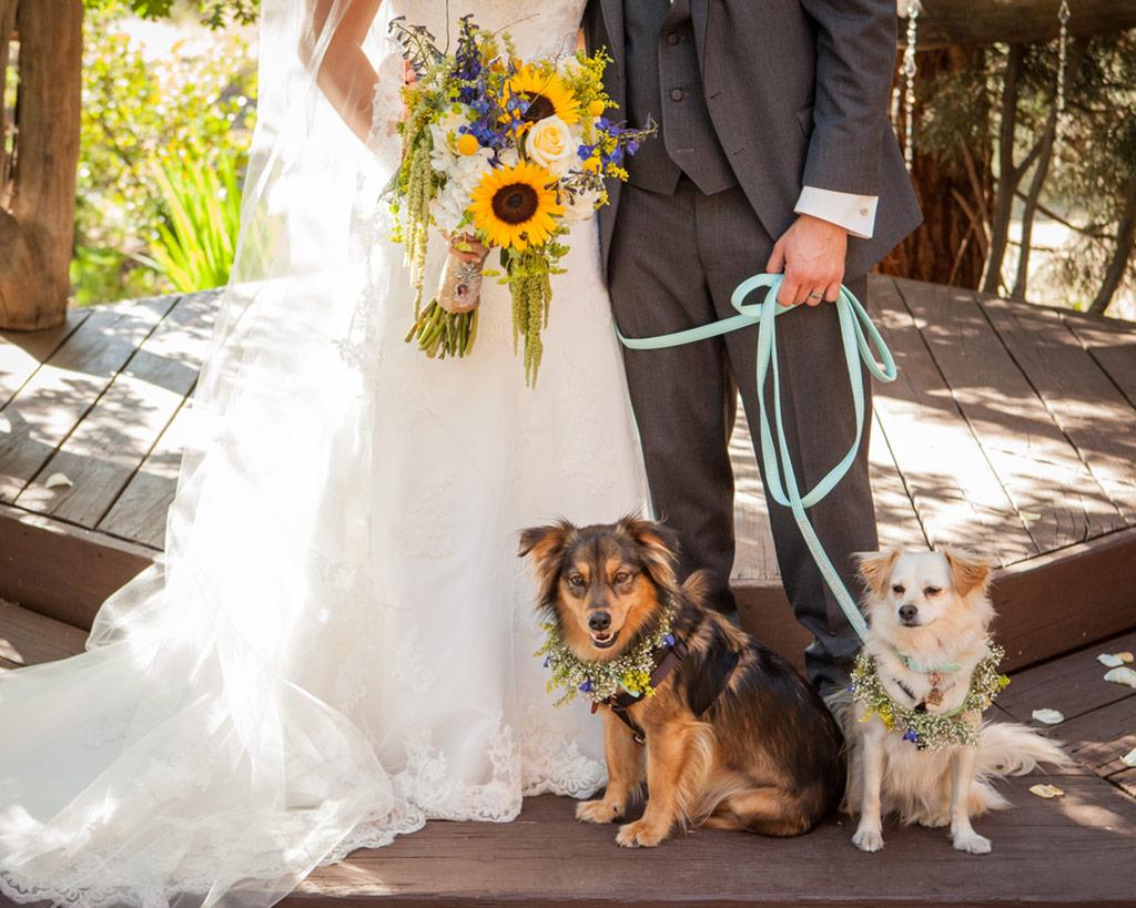 Incluyendo a tu mascota en el matrimonio… un plan de contingencia en el día del matri para tu amigo de 4 patitas.